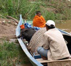Travel and Landscape Photography Landscape Photography, Vietnam, Animals, Travel, Animais, Animales, Animaux, Viajes, Destinations