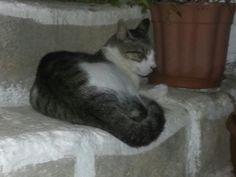 Cat of Kamilari, Crete Crete, Cute Cats, Animals, Pretty Cats, Animales, Animaux, Animal, Animais