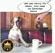 Funny Cartoons, Funny Jokes, Funny Greek Quotes, Monday Quotes, Make Me Happy, Kai, Dog Lovers, Funny Pictures, Words