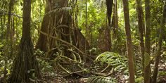 The Amazon Rain Forest Is Drying Out, Probably Because Of Climate ...