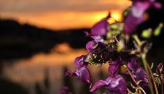 Flowers Sunsets and Sun Rises