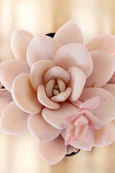 Yes, a pink succulent exists and yes, you can grow it. #GreatLandscapingIdeas