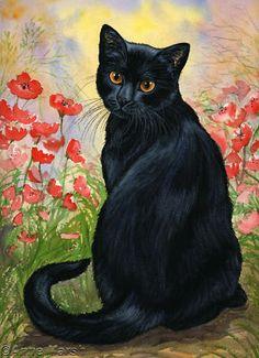 Mis dos amores.  Gato negro y amapolas...                                                                                                                                                      Más