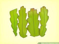 Image titled Grow Epiphyllum Cactus Step 1