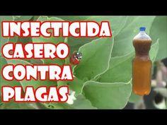 Insecticida casero para combatir plagas pulgón, cochinilla, araña roja, mosca blanca en las plantas
