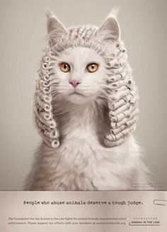 15 Super Creative Print Ads With Animals - World's largest collection of cat memes and other animals Funny Cats, Funny Animals, Cute Animals, Funny Prints, All About Cats, Animal Rights, Photomontage, Animal Design, Print Ads