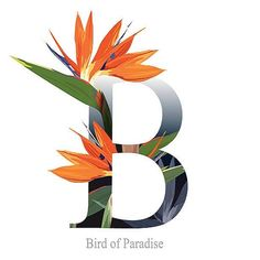 Letter B vector alphabet with bird of paradise flower. ABC concept type as logo. Typo Logo Design, Typography Logo, Flower Alphabet, Flower Letters, Alphabet Design, Monogram Alphabet, Cute Family Photos, S Love Images, Birds Of Paradise Flower