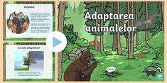 Adaptarea animalelor - Prezentare PowerPoint (teacher made) Google Drive, Teacher, Movies, Movie Posters, Art, Beast, Art Background, Professor, Films