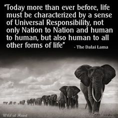 We are custodians and must look after our planet and all it's inhabitants, they all have a right to life, liberty and justice. Especially the ones with no voice