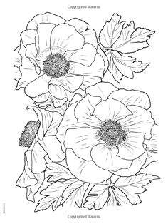 Creative Haven In Full Bloom Coloring Book Books Ruth Soffer