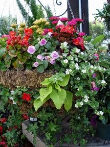 Once you discover how a climatically formulated potting soil improves your hanging baskets, you'll never settle for anything else. Hanging Flower Baskets, Hanging Pots, Garden Urns, Garden Soil, Container Plants, Container Gardening, Flower Containers, Floating Garden, Potting Soil
