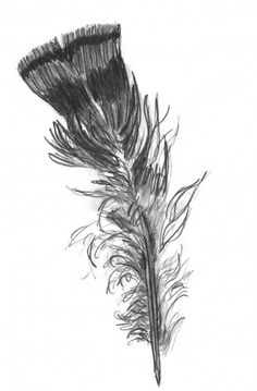 Google Image Result for http://images.fineartamerica.com/images-medium/wild-turkey-feather-kevin-callahan.jpg