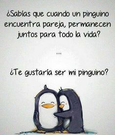 ¿Te gustaría ser mi pingüino? Pingüino, love, amor, enamorados, penguin.