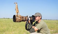 Photographer Will Burrard-Lucas got more help than he bargained for when he went to shoot a new family of meerkats in Makgadikgadi region of Botswana. The new arrivals used the photographer as a look out post before trying their hand at taking pictures.