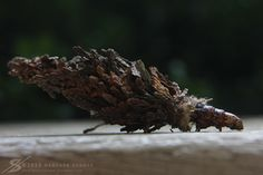 I've nicknamed it the hermit worm before letting it go. He slowly pokes his head out, looks back and forth; then slowly up - like he is sniffing the air. Bag Worms, Nature Photography, Scary Things, Herbs, Deviantart, Bugs, Weird, Creepy Things, Beetles