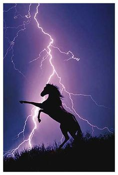 lightning horse Horse Photos, Pictures Of Horses, Animal Pictures, Pretty Horses, Beautiful Horses, Horse Love, Animals Beautiful, Horse Silhouette, Horse Art