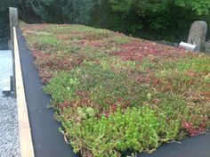 Riefa® Boards are a light weight, organic, economical alternative to a traditional green roof. Riefa® Boards can be fitted directly onto a root resistant, waterproof membrane, then covered in a layer of living vegetation. Riefa® Board can be used in conjunction with many types of vegetation, including sedum, wildflower, chamomile & herbs. A living roof covering has many benefits including energy conservation, extending the life of a roof. http://www.riefagreenroof.co.uk
