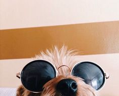It's a dog's life Cute Puppies, Cute Dogs, Dogs And Puppies, Doggies, Animals And Pets, Baby Animals, Cute Animals, Tattoo L, Cute Creatures