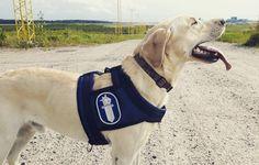 Finnish Police K9 Nanoq🐶 #iupoliisi #iupoliisik9 #poliisi #poliisikoira #polis #polishund #police #policek9 #policedog #poliisinpäivä #poliisinpäivä2016 #erikoisräjähdekoira #specialsprängämneshund #specialexplosivessearchdog #Nanoq