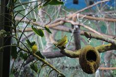 Aviario dentro del Butterfly House en Suecia