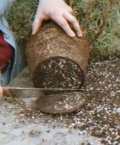 Pour garder 1 beau romarin, il faut émonder les racines une fois par an.
