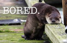 Otter-lock is bored.
