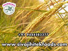 #basmati #rice #brands #basmati #Rice #online #basmati #brown #rice http://sivajihitekfoods.com/products/basmati-rice/