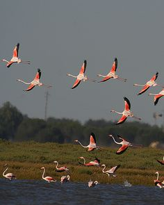 FLAMINGOS | Flickr - Photo Sharing!