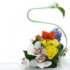 yau flori 2012+cos asimetric