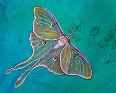 Pamela Kirkham of Kirkham Fine Arts creates stunning paintings of nature's wonders. Fight Or Flight, Nature Paintings, Moth, Creatures, Fine Art, Hdr, Artwork, Tiles, Animals