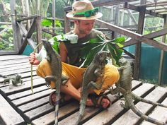Perhaps the only good story that ever started with a salad. Green Iguana Conservation Project, San Ignacio, Belize