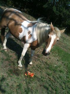 Ponies love watermelon