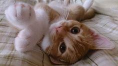 Awwww so cute!!