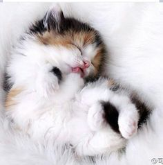 Cats Adoption Essex out Cute Animals Wallpaper For Mobile provided Pet Kittens For Sale In Bangalore upon Cute Animals Gif Red Panda all Cute Baby Animals Cartoon Images Baby Animals Pictures, Cute Baby Animals, Funny Animals, Animals Images, Funny Horses, Animal Babies, Pretty Cats, Beautiful Cats, Animals Beautiful