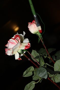 """Alice in Wonderland- """"Paint the roses red"""""""