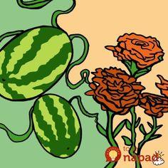 Skúsený záhradkár pre každého, kto chce pestovať domácu zeleninu: Držte sa tohto plánu aúrodu nebudete stíhať zberať