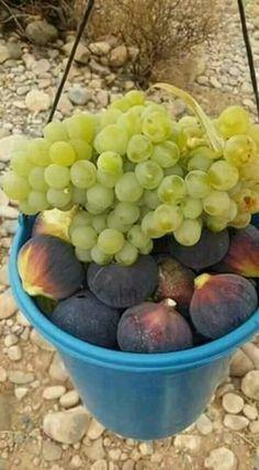 Fruit Plants, Fruit Garden, Fruit Trees, Fresh Fruits And Vegetables, Fruit And Veg, Figs Benefits, Fruit Photography, Juicy Fruit, Exotic Fruit