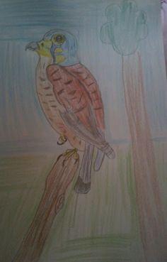 luonto piirustus kuvia: Tullihaukka peto lintuja