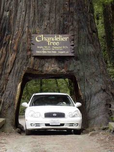Sequoia National Park (second oldest park in America and the only place to see giant sequoia trees)