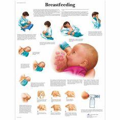 Breastfeeding - 1001578 - - Gravidanza e Parto - Scientific Baby Massage, Tire Lait, Newborn Schedule, Feeding Schedule For Baby, Pumping Schedule, Baby Feeding Chart, Baby Sleep Schedule, Third Baby, Breastfeeding Tips
