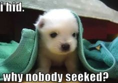 I played hide and seek... but nobody seeked me #puppy