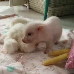 Piggy http://ift.tt/2ffDeDh