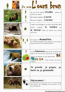 "Search result for ""documentary brown bear maternal"" - animals Web Animal, French Classroom, Petite Section, French Immersion, Forest Animals, Learn French, Teaching Tools, Brown Bear, Botany"
