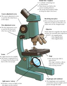 Natural Sciences Grade 9 Microscope Parts, Science And Nature, Confirmation, Biology, Lab, Natural, Projects, Kids, Log Projects