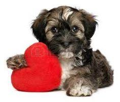 Afbeeldingsresultaat voor leuke kleine honden