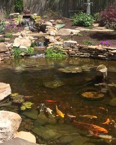 42 Newest Fish Pond With Gazebo Designs Ideas For Your Backyards Fish Pond Gardens, Fish Garden, Koi Fish Pond, Water Falls Garden, Water Falls Backyard, Small Fish Pond, Small Backyard Ponds, Backyard Stream, Garden Stream