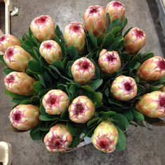 Colour is 'Grandicolor' Sold in bunches of 10 stems from The Flowermonger, the wholesale floral home delivery service. Gift Bouquet, Diy Wedding Bouquet, Diy Wedding Flowers, Fresh Flowers, Pink Flowers, August Flowers, Protea Flower, Australian Native Flowers, Amazing Flowers