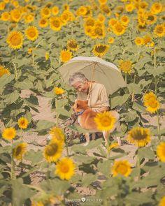 Dog Wallpaper, Cute Wallpaper Backgrounds, Cute Wallpapers, Animals For Kids, Cute Animals, Sunflowers And Daisies, Black Lab Puppies, Corgi Puppies, Shiba Inu