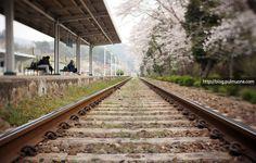하동역 벚꽃 - Google 검색