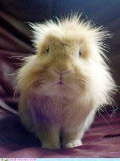 Not a guinea pig!! That's a bun!